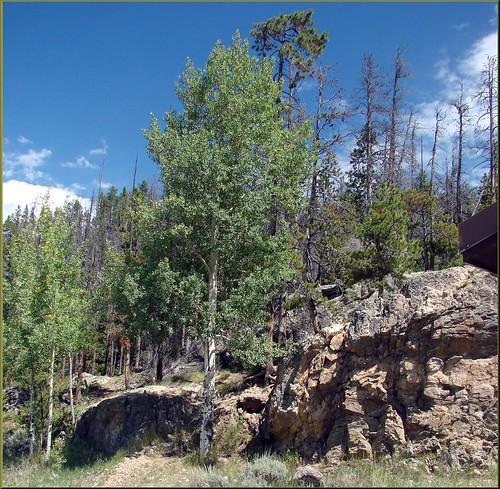 usa sign waterfall colorado aspen cascade mountainstream adamsfalls rockymountainnp foresttrail liferule dgrahamphoto
