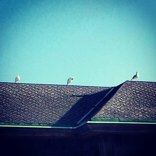 Seagulls catching the morning sun by quilter4010