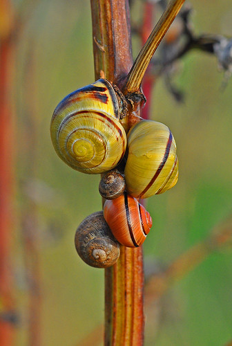 Banded Snails Pegwell Bay by Kinzler Pegwell