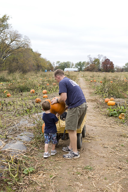 pumpkinpatch_24
