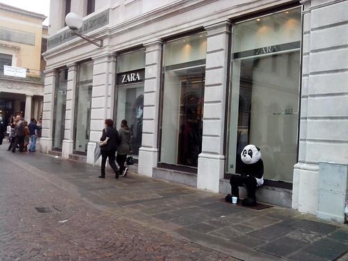 L'orso Panda di Padova by Ylbert Durishti