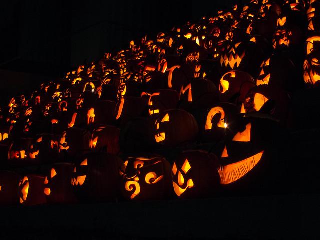 Pumpkin Mania Transy