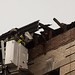 Hurricane Sandy in West Harlem:  Building Damage 3525 Broadway
