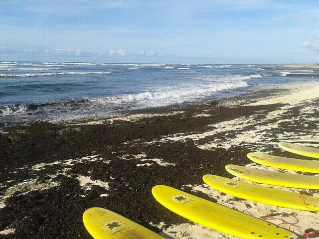 tablas surf - fuerteventura beach