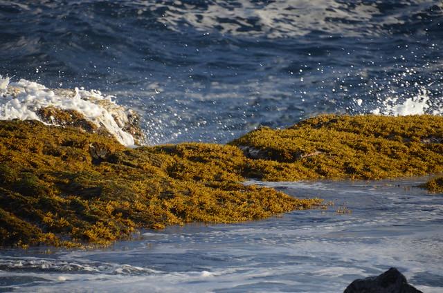 Waves at Puna coast (DSC_4164)