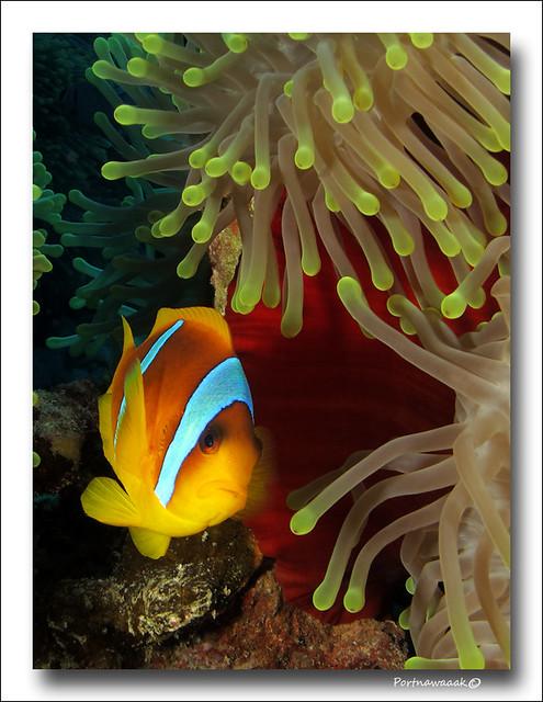 de retour de mer rouge - EGYPTE 8142675288_9facedc506_z