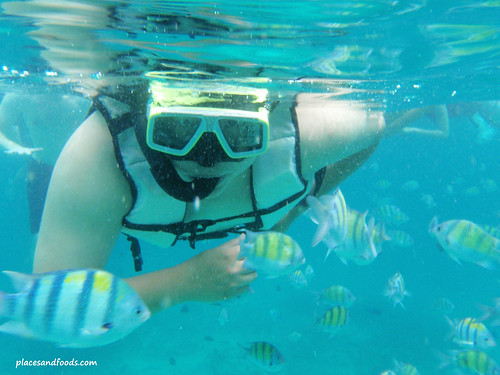 phi loh samah snorkelling