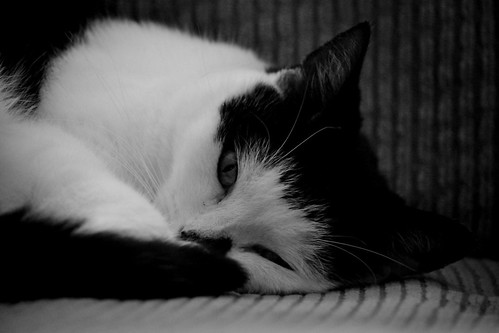 friends blackandwhite pet pets animals cat portraits nikon novascotia faces beaverbank nikond3100