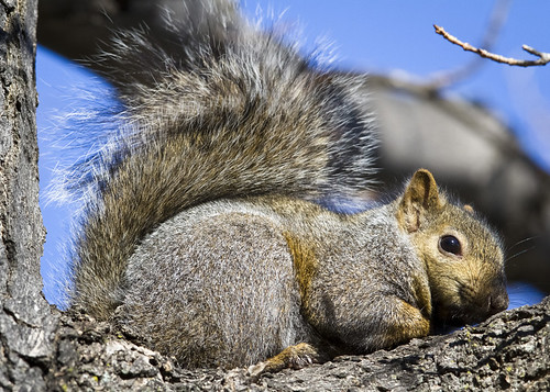 A Cute and Content Squirrel by Ricky L. Jones Photography