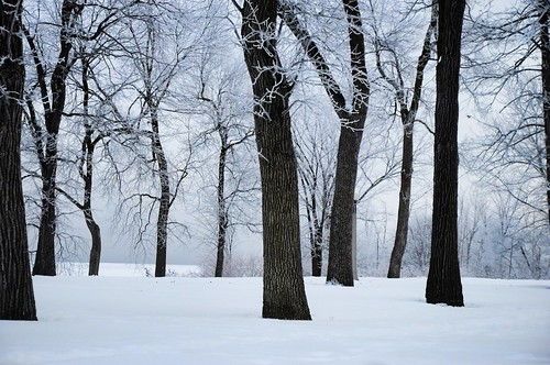 park winter white mist snow ontario canada tree ice nature fog river landscape island frost view quebec ottawa horizon frosty scene cover neige bate beyondhue
