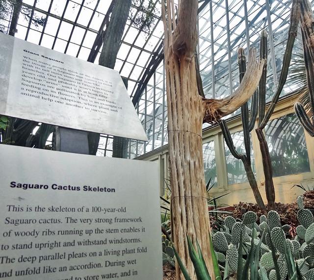 cactus-skeleton
