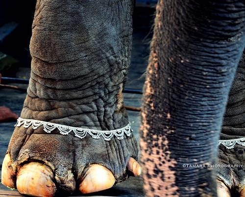street india elephant animal temple nikon worship hindu aasia anklet pondicherry southindia photomix indiatravel puducherry ringexcellence dblringexcellence nikond5100