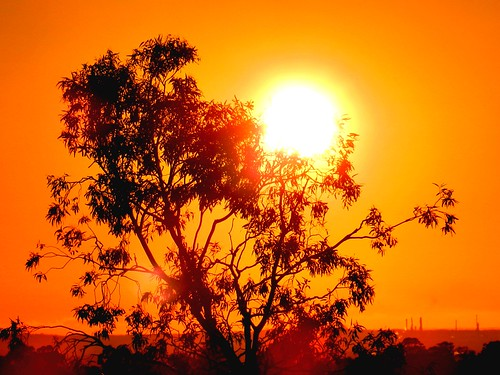 morning sky orange sun sunlight tree colors leaves silhouette composition sunrise spectacular golden scenery day mood colours sydney creative silhouettes explore colourful goodmorning morningsun sunflare goldencolours goldensunrise goldentones colourtones nikond90 sunrisesilhouette
