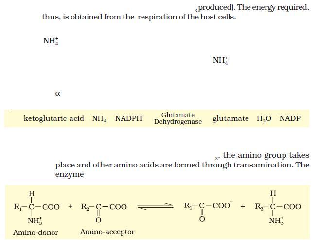 NCERT Class XI Biology: Chapter 12 - Mineral Nutrition