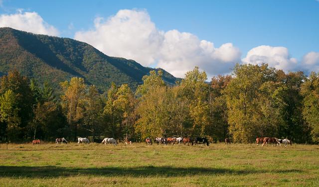 Horse Herd, Cades Cove
