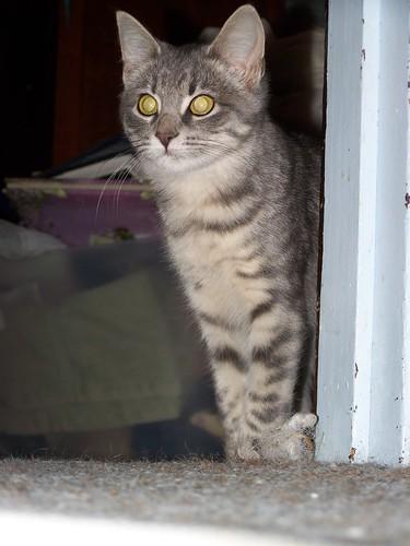 pretty Cato (Kado) by Emilyannamarie