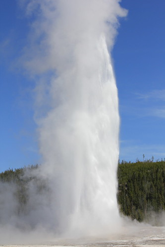 Old Faithful 12