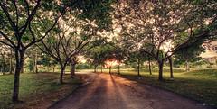 Sunrise @ cyber park