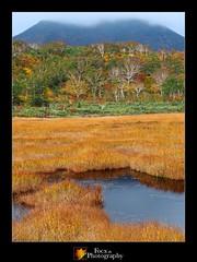 Shinsen-numa Wetlands