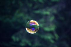 liquid bubble, sphere, organism, macro photography, green, close-up,