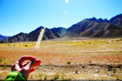 8102014098 cab7012526 藏梦●追寻诺亚方舟之旅:梦境日喀则   王佳冬个人博客