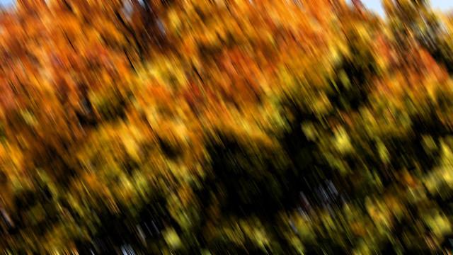 Herbst / Autumn - #4