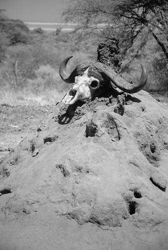 lunch termite mound