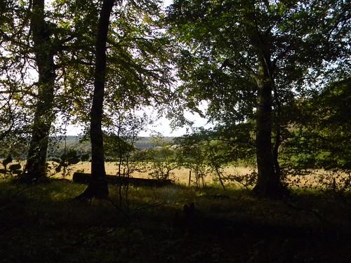 field through trees