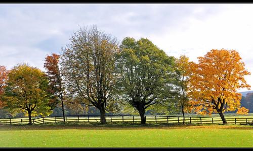 uk autumn trees england home fence nikon lancashire autumncolours treeline autumnal 2012 burnley d90 towneley cliviger towneleypark nikond90 myfreecopyright swjuk mygearandme oct2012