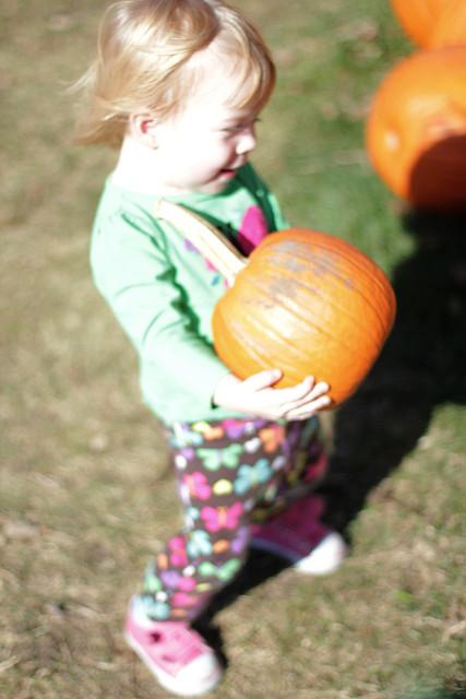 Sekapp's Pumpkin Farm