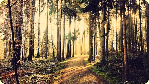 trees light nature sunshine forest sunrise switzerland shine theroad