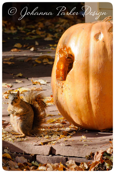Little-Squirrel-&-Pumpkin-1