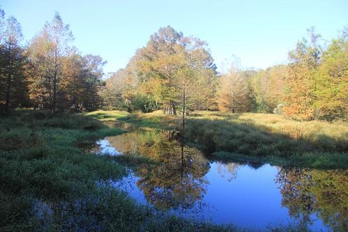 fall canon scenic cypress wetland 60d canon60d whitecypress kellyspond