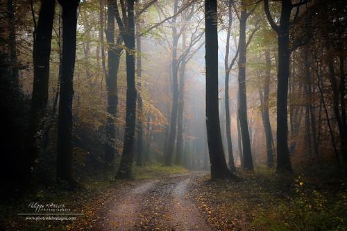 trees france tree fall fog forest automne brittany bretagne breizh arbres foret arbre brouillard ballade brume broceliande paimpont trehorenteuc plelan foretdebroceliande philippemanguin
