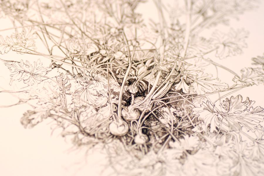 Сара симблет: ботаника для художников {иллюстрация, дизайн и.