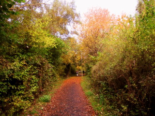 BIRCHWOOD IN AUTUMN.1