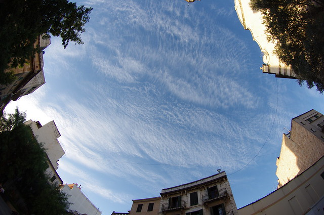 El cielo se asoma./ The sky looks at.