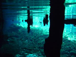 Bild von Große Cenote. travel mexico tulum cenote grancenote
