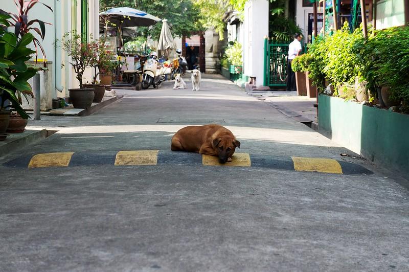 Trip to Bangkok2013-01-01 95