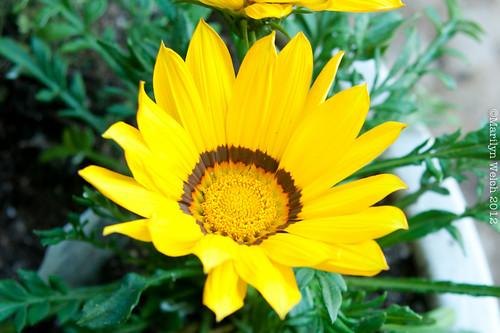 January Flower