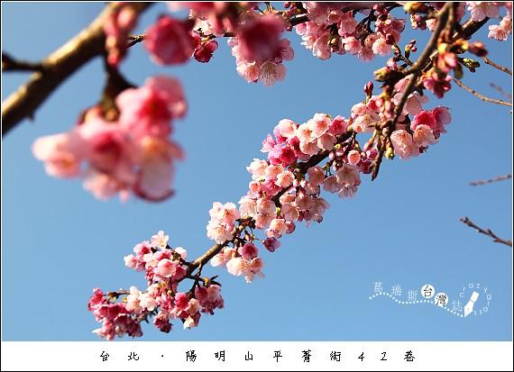 IMG_6831