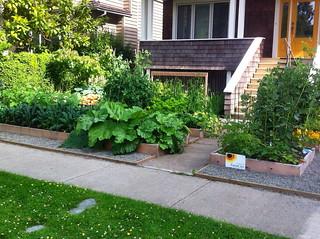 Front Yard Garden - July