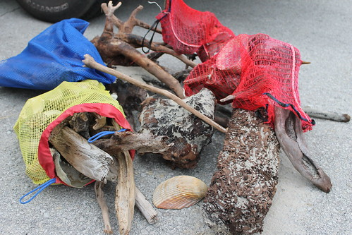 Ocracoke Island shelling. driftwood & shells