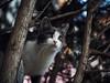 Street cat 161 by Yalitas