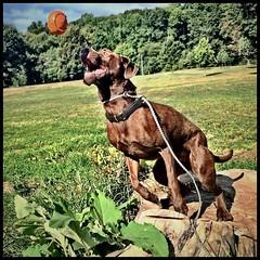 #Bosco #prospectpark #brooklyndog #dogifinstagram #cameraplus