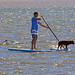 Dog Paddling by por2able