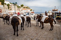 On the Greek island of Hydra no cars are allowed and the primary mode of transport is the beloved donkeys. #travel #greece #island