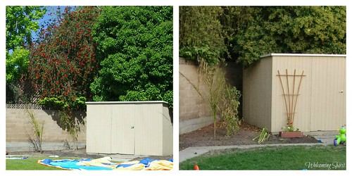 backyard_beforeafter