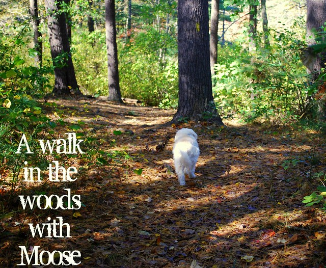 Walk in the woods with Moose txt
