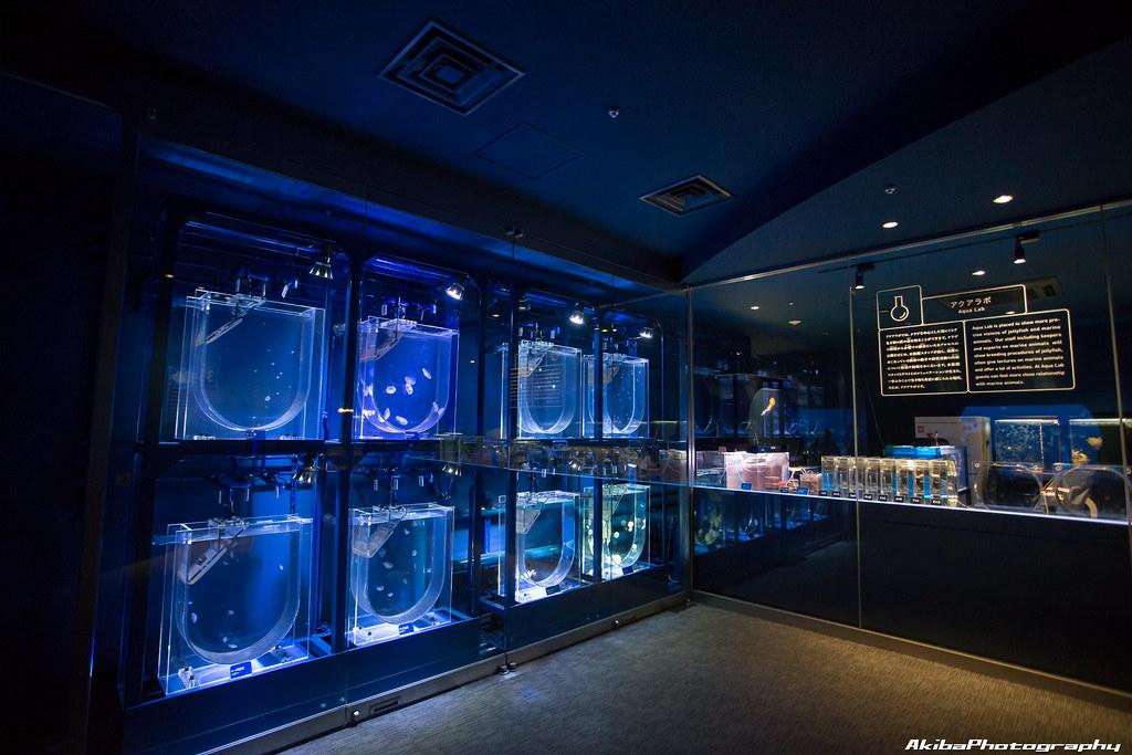 sumida-aquarium#10